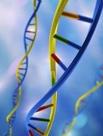CG  DNA