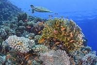 エジプト 紅海 海