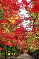 京都府 紅葉の光明寺