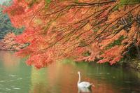 南伊那ヶ湖の紅葉