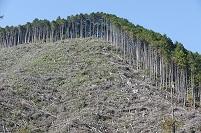 植林と伐採