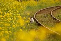千葉県 線路と猫