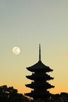 京都府 夕暮れの東寺五重塔と月