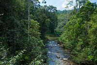 スリランカ シンハラジャ森林保護区
