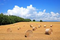 日本 北海道 麦わらロールの丘