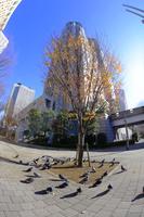 東京都 都庁舎と路上のハト