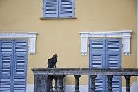 イタリア リグーリア州 猫