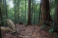 スリランカ シンハラージャ森林保護区