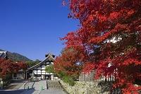 京都 嵯峨野 天龍寺