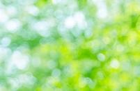 新緑のアウトフォーカス