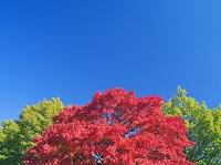 山梨県 紅葉と青空 清里