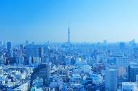 東京都 文京区から望む東京スカイツリー