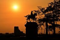 宮城県 朝日の中の伊達政宗騎馬像