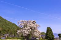 北小倉の桜と青空