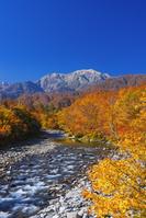 新潟県 秋の北ノ又川と越後駒ヶ岳