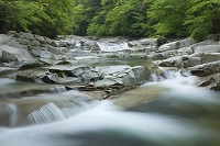 愛媛県 面河渓 面河川