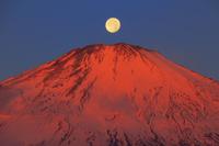 日本 静岡県 朝日に染まる富士山と落月