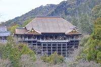 京都府 京都市 屋根ふき替え工事の終了した清水寺