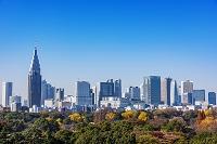 東京都 新宿ビル群と御苑の紅葉