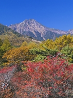 山梨県 紅葉の美し森より八ヶ岳