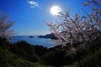 太陽の恵み 錦から 東紀州