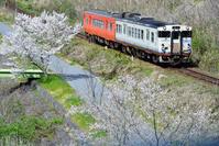 岡山県 津山線 キハ47系快速ことぶきと満開の桜