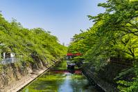 岐阜県 大垣市 新緑の水門川 奥の細道結びの地