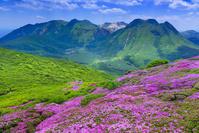大分県 ミヤマキリシマ咲く平治岳よりくじゅう連山