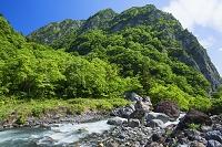 新潟県 新緑の小滝川ヒスイ峡より明星山