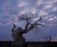 枯れ木と曇り空