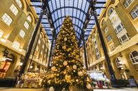 イギリス クリスマスツリー  ロンドン