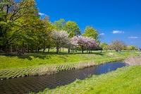 東京都 春の武蔵野公園