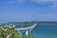 角島大橋と角島とフヨウの花