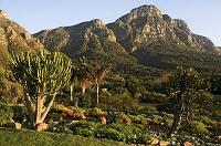 南アフリカ 西部岬 ケープタウン