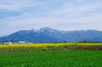 福井県 荒島岳と菜の花の咲く田園