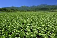 群馬県 高原野菜産地