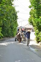 沖縄県 備瀬の観光水牛車