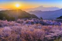 福島県 桜峠のオオヤマザクラと飯豊山