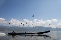 ミャンマー インレー湖 ボートに群がる鳥