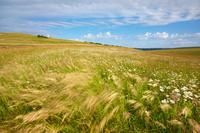 イギリス 風にゆれる草原