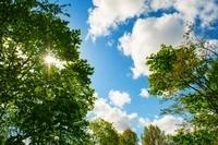 青空と木漏れ日