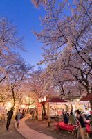 京都府 京都市 平野神社 夜桜