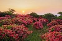 栃木県 八幡のツツジ園地と朝日 那須高原