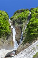 富山県 新緑の称名滝とハンノキ滝