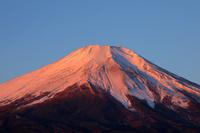 山梨県 朝日に染まる富士山