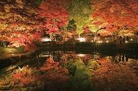 岐阜県 曽木公園 紅葉ライトアップ
