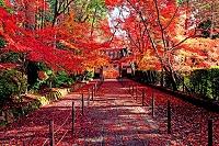 京都府  光明寺