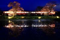 千葉県 小湊鉄道と夜桜