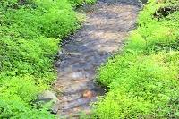 秋田県 にかほ市 元滝近くの小川と若草