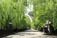 秋田県 新緑の角館武家屋敷